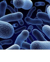 bacteria4